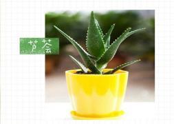 8种常见绿植的浇水栽培方法,超实用! 